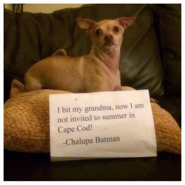 Dog-Shaming-Chalupa