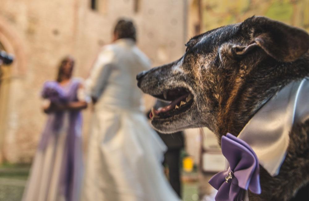 servizio nuziale dogsitting bologna