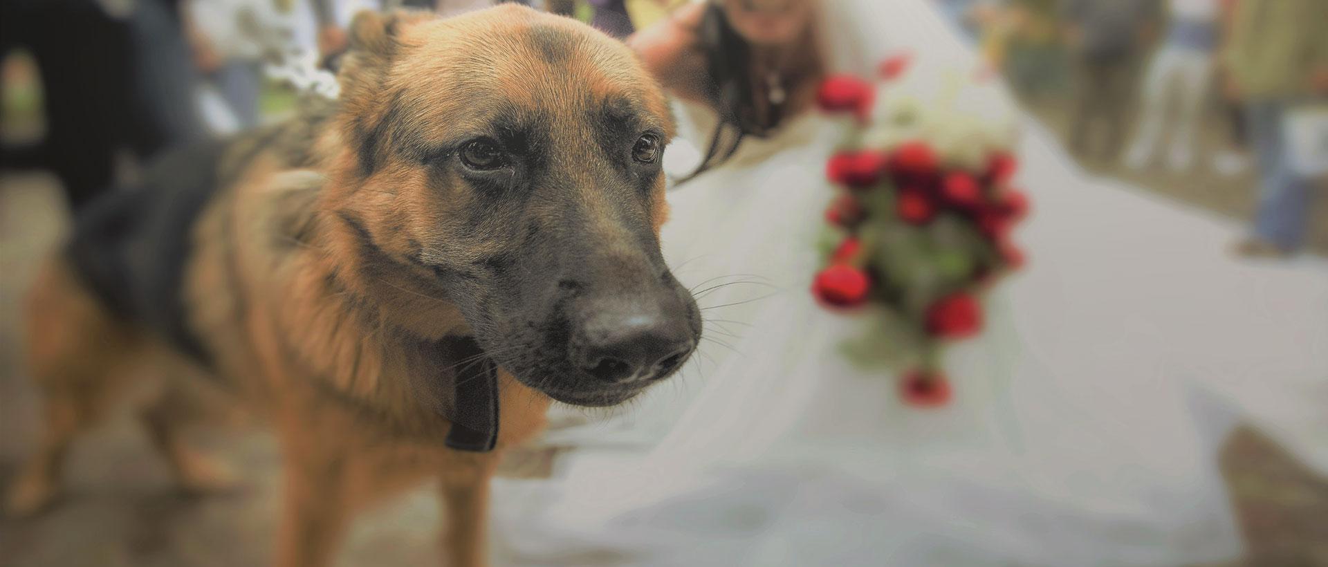 Dogsitter bologna matrimonio
