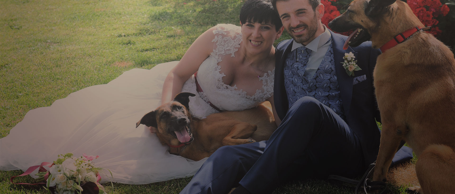 dog sitting matrimoni