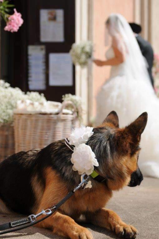 PER I MIEI AMICI A 4 ZAMPE: COME ESSERE OSPITI D'ONORE AL WEDDING