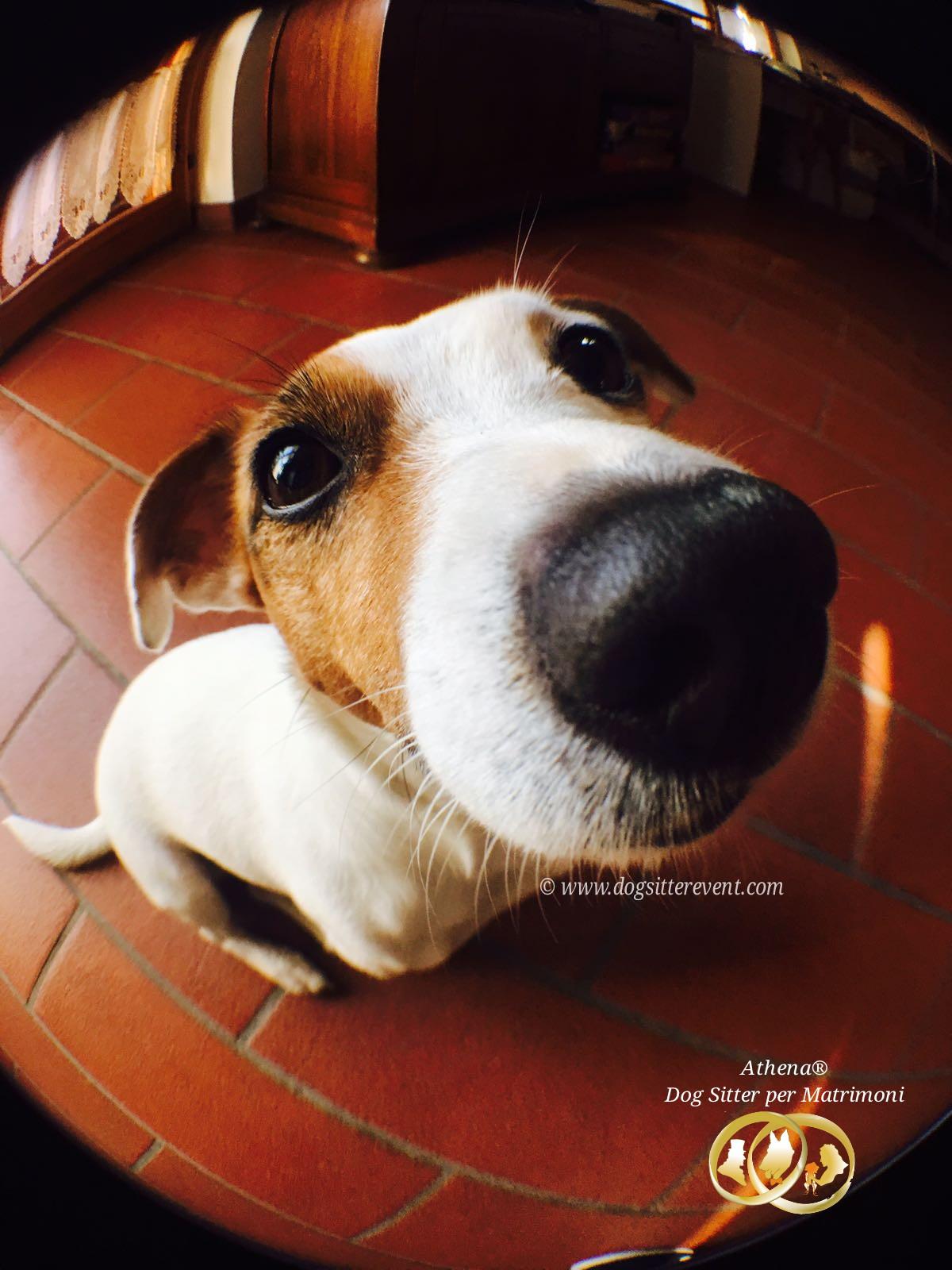 Dog Sitter per Matrimoni Athena, un consiglio per il vostro cane