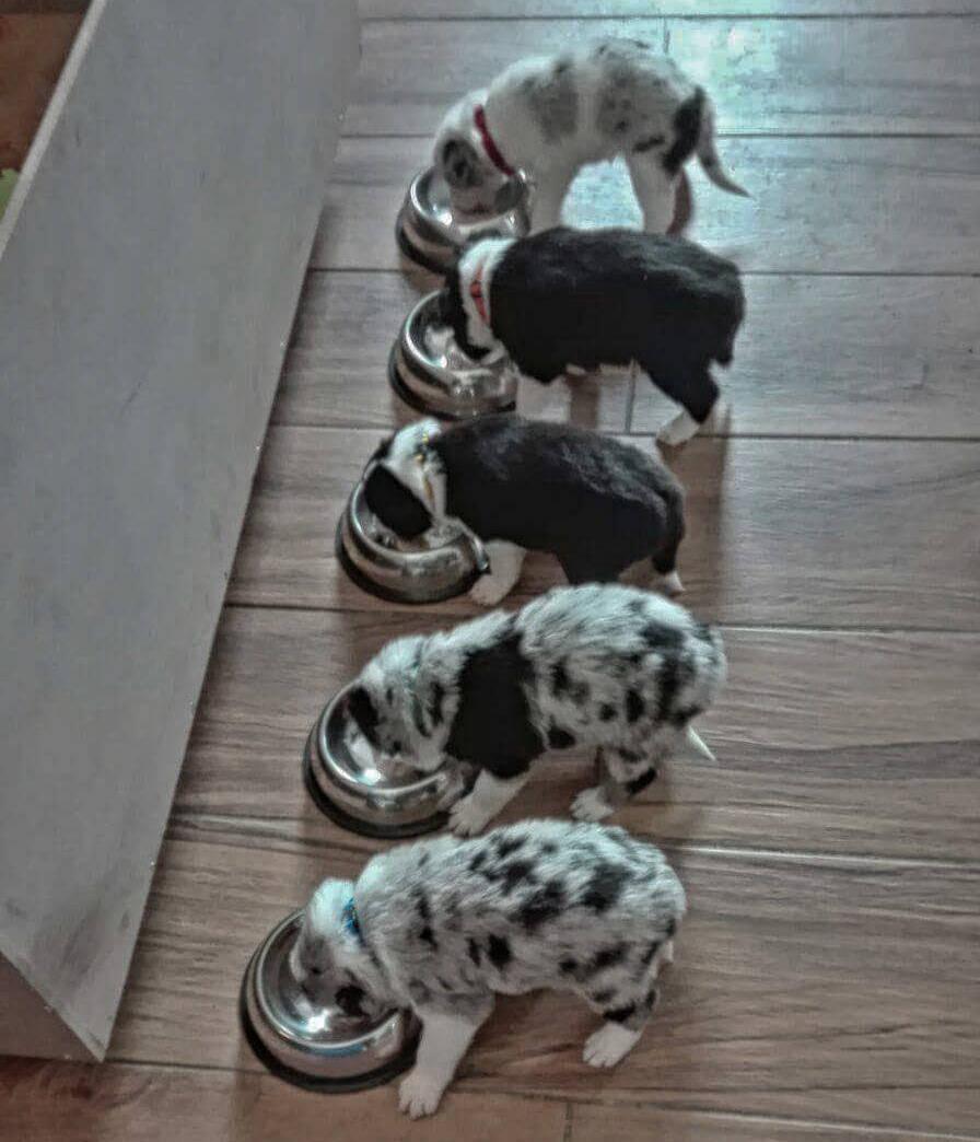 Cibi tossici per cani e gatti