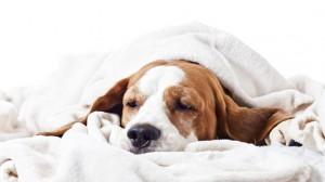 Poisoned Sick Dog