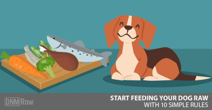 Start feeding your dog raw - Feature