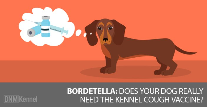 kennel cough vaccine