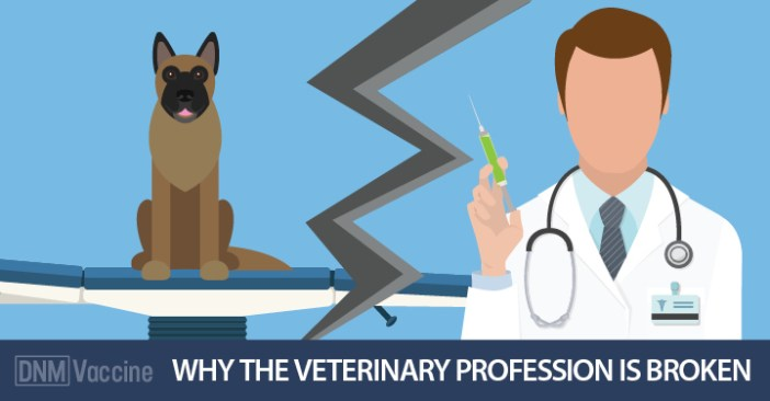 dog vaccine reactions