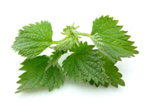 nettle-the-miraculous-cure1