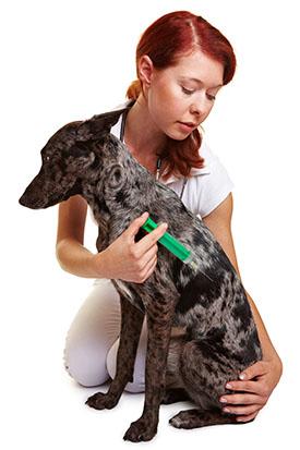 Vet vaccine dog