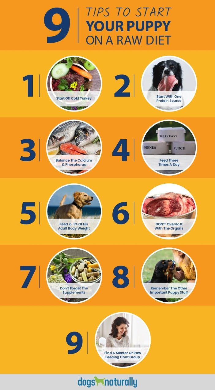raw diet for puppies