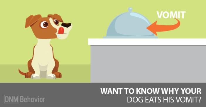 dog eating vomit