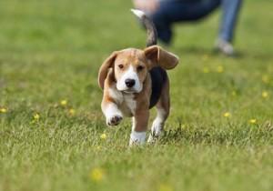 Puppy Vaccine Park Parvo Distemper