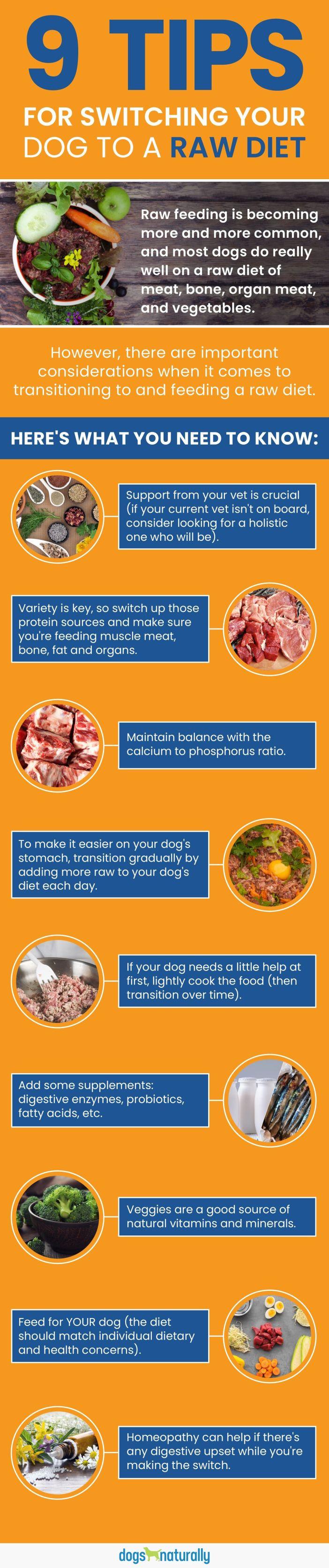 holistic approach to raw feeding