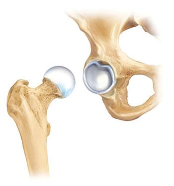 Articular (joint) cartilage