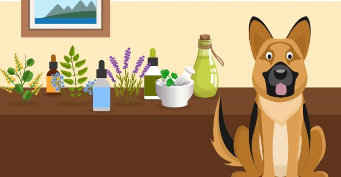 20 Natural Remedies for dogs