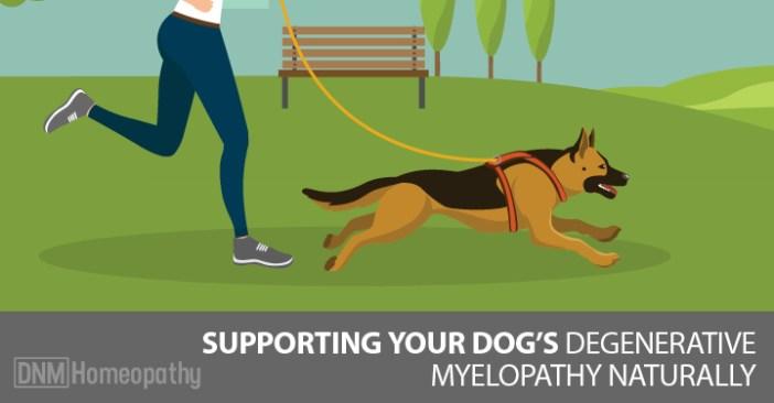 degenerate myelopathy in dogs
