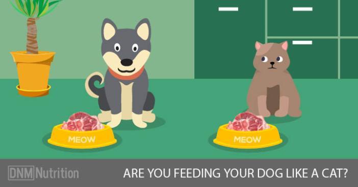 FeedingYourDogLikeACat