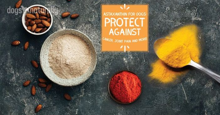 astaxanthin for dogs