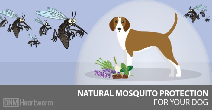 natural-mosquito-repellents-for-dogs