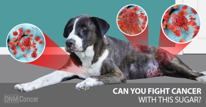 cancer fighting foods in dogs