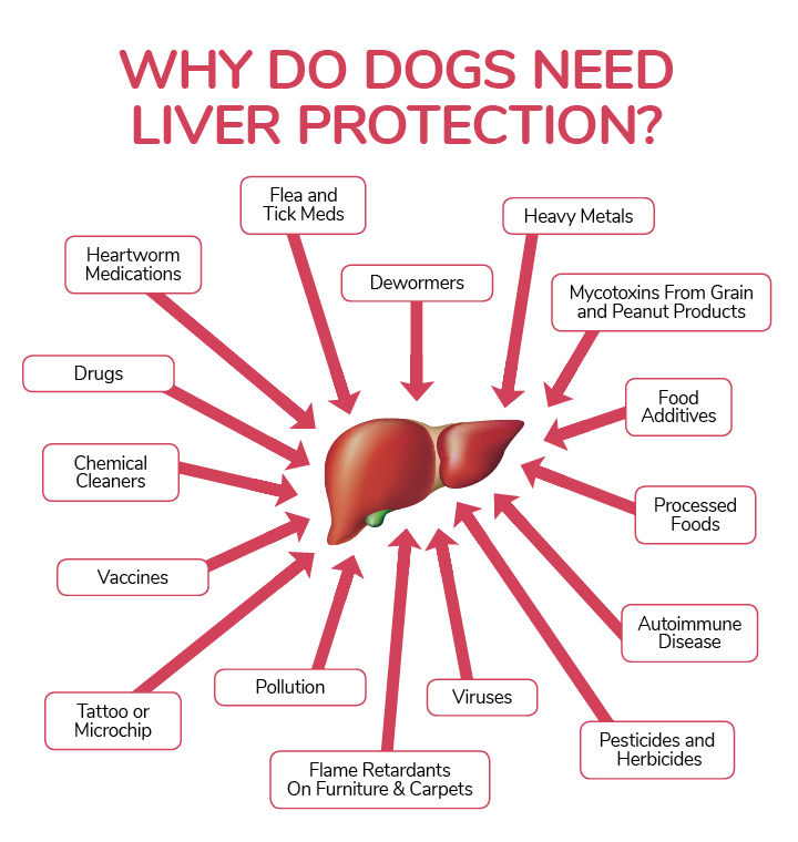 symptoms of liver disease in dogs