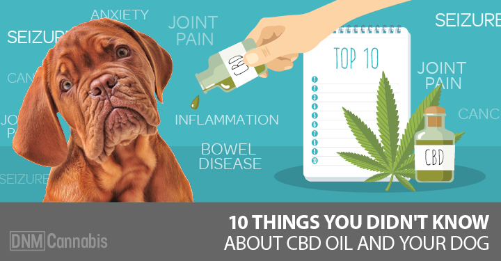 10 Things You Didn't Know About CBD Oil For Dogs - Dogs Naturally Magazine