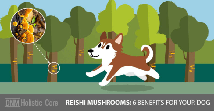 the 6 Benefits of Reishi Mushrooms for Dogs