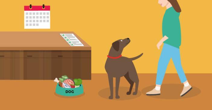 Steps to A Healthier Dog