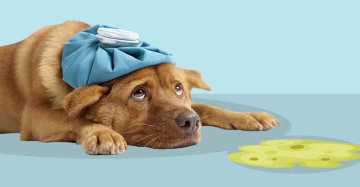 Dog vomiting