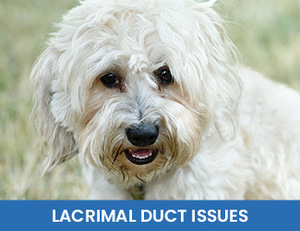 Lacrimal Duct Issues
