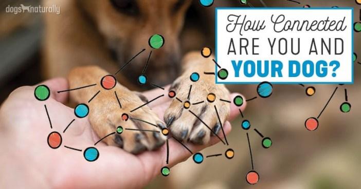 dog human health connection