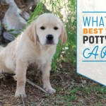 Simple Tips For Potty Training A Puppy