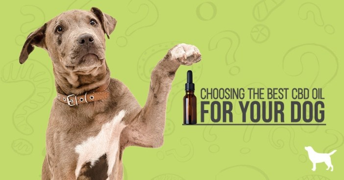 """A holding is paw up to ask the question, """" choosing the best CBD oil for your dog"""""""