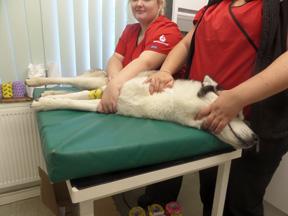 Pet Blood Bank donation