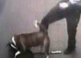 man kicking dog