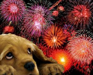 dog-firework