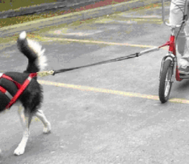 dog-and-scooter