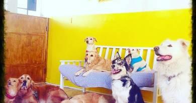 Dogxford, asilo per cani tra scienza, etologia e cinofilia.