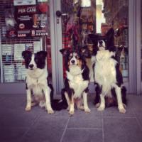Ecco cosa puo' pensare un commerciante se il cane è libero in negozio!