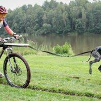Bikejoring! In Mtb con il cane: istruzioni per l' uso