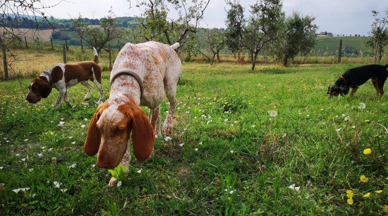 I bracchi bed & breakfast, 100 % Dog friendly a Rimini!