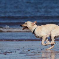 Cane libero senza guinzaglio: che si rischia? Chi rischia?