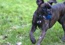 Milano, GreenWeek – 3 giorni dedicati ai cani e all'educazione