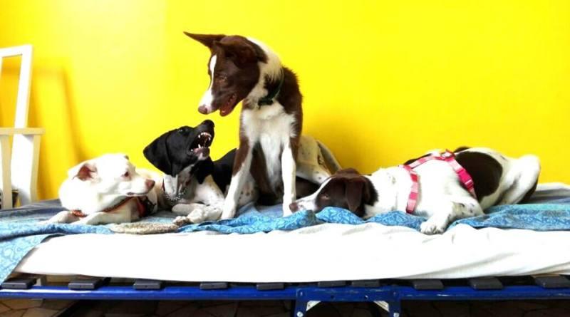 Mentre lavori, il tuo cane impara e socializza, un sogno? No, Dogxford!