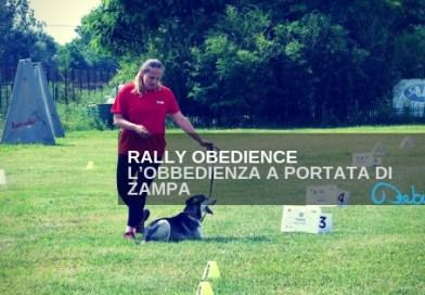 Rally Obedience  L'obbedienza a portata di zampa