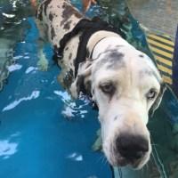 Difficoltà motorie nel cane anziano