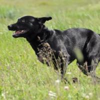 Il richiamo del proprio cane, gioie e dolori di tanti proprietari