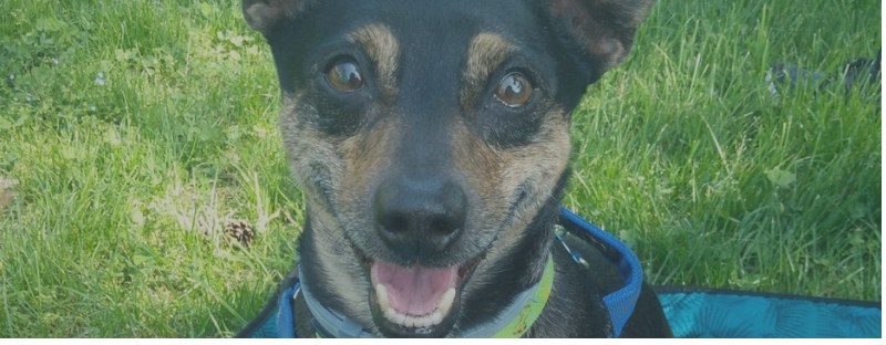 Puffolo, salvato da un triste destino, oggi fa Pet Therapy e ride alla vita!