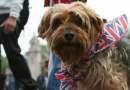 Londra dice NO alla vendita di cani in negozio.