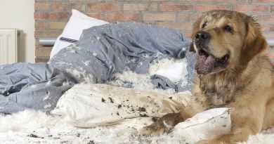 Quando sei stressato che cosa fai? Che cosa fa il tuo cane?